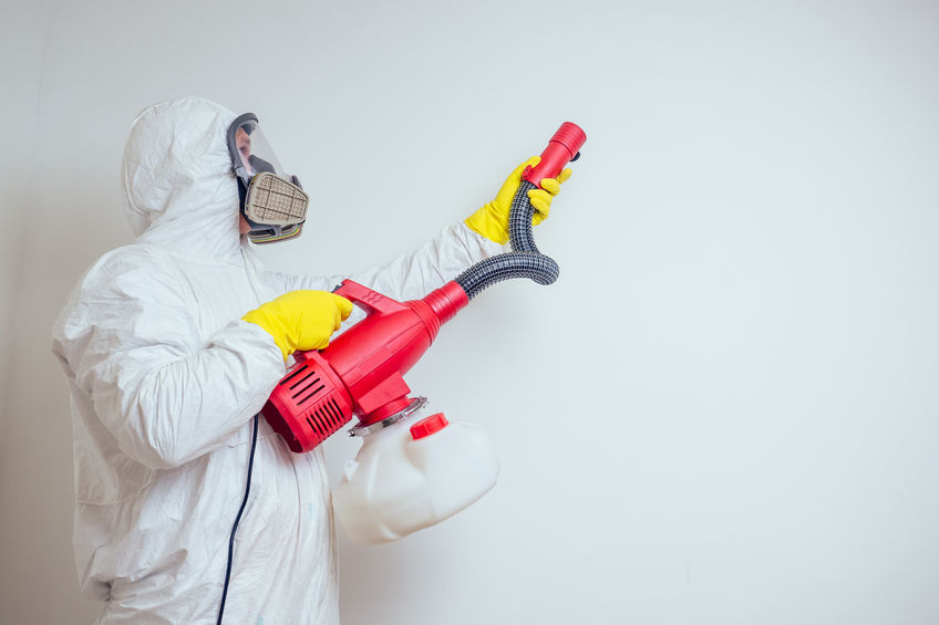 pest control worker spraying pesticides with sprayer in apartment copy spase white walls background .