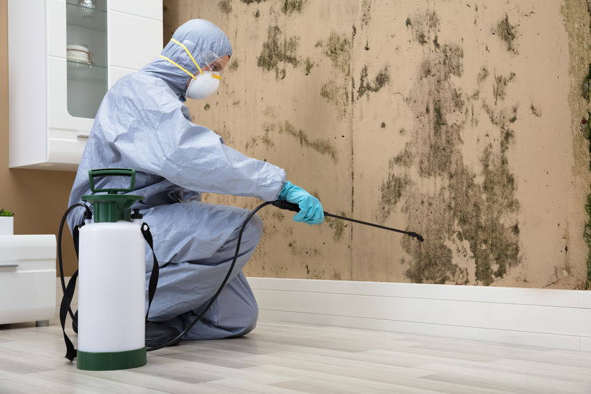 Pest Control Worker In Uniform Spraying Pesticide On Damaged Wall With Sprayer